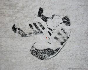Adidas Sneaker Wallpaper kostenlos runterladen