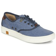 Timberland Sneaker Amherst Oxford